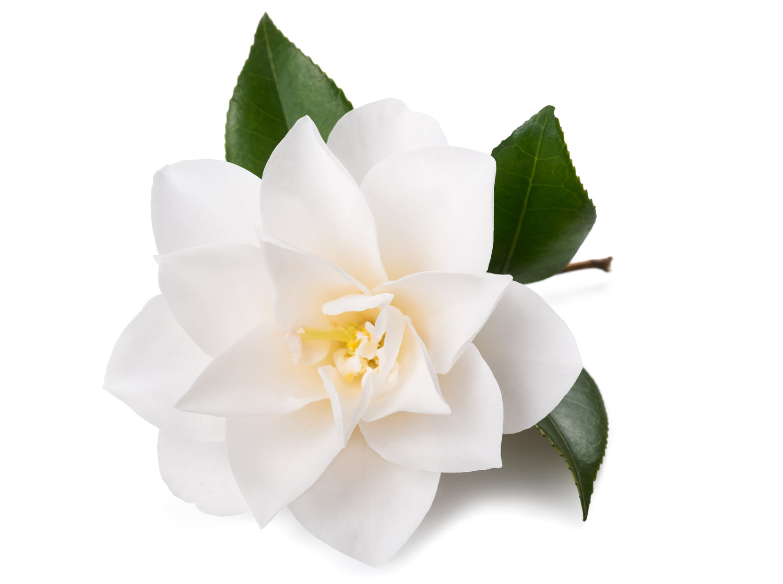 Shampoo antigiallo  rinnova i capelli bianchi e grigi - Hairmed 25620825abad